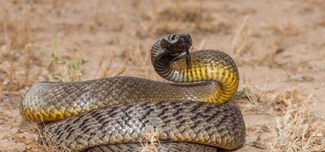 first aid for snake bites